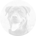 dogsneedtraining