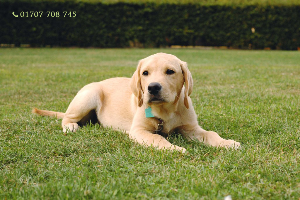 Dog training Brookmans Park